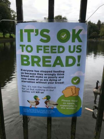 OK to feed bread flyer